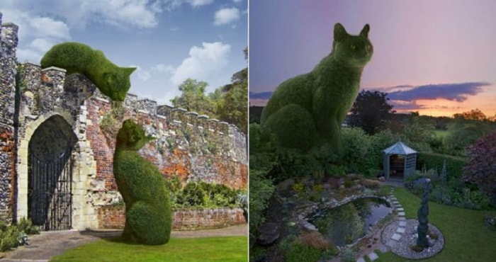 Topiary Cats 'Seen by Millions' on Facebook! 4