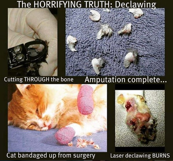 Images circulated on social media showing close-ups of cat declawing.