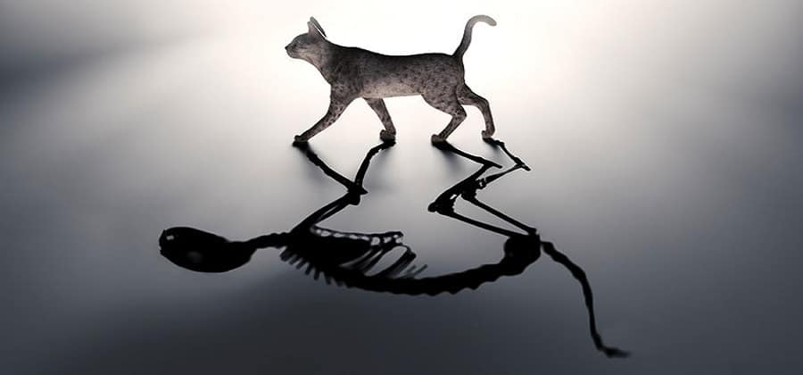 CAT CLUES  Schrödinger's mythical cat is alive and dead at the same time. Scientists have wrangled microwaves into similarly bizarre quantum states, and now they are taking the experiment a step further, splitting one catlike state into two boxes.