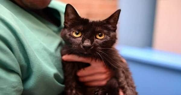 UPDATE – Man Charged After Kitten Was Doused in Motor Oil and Abandoned!