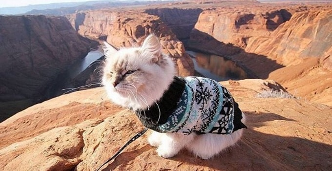 """Skye, a Siberian with over 2200 Instagram followers, conquers the """"meowtains."""" (Instagram/Camping with Cats)"""