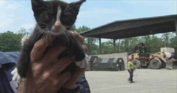 Kittens Rescued from Dumpster! – VIDEO!