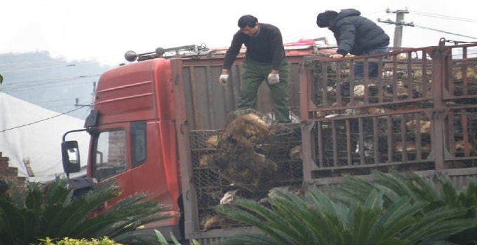 Over 9 Million Chinese Back Bill To End Cat and Dog Meat Eating!