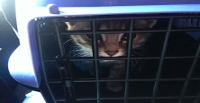 Cat-arrested-dept-min