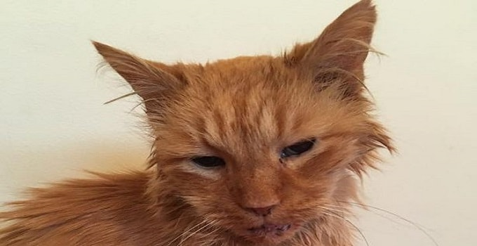 96-year-old Ginger Cat Gets Rehomed, Thanks Largely to Social Media!