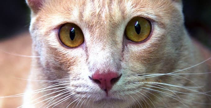 Pennsylvania Policeman Who Shot Cat For Hissing At Him Cited for Cruelty to Animals!