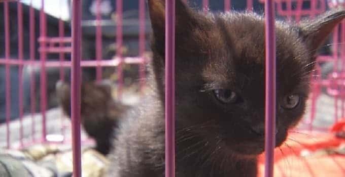 abused-kitten-jpg-min