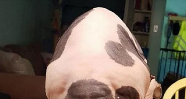 Sphynx Cat Appears to Outline of Voldemort's Face .. On Her Butt!