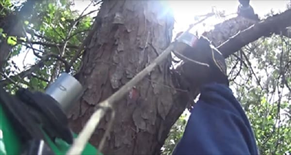 Sammie the Cat is Rescued Having Spent 11 Days in a Pine Tree! Watch the Dramatic VIDEO!