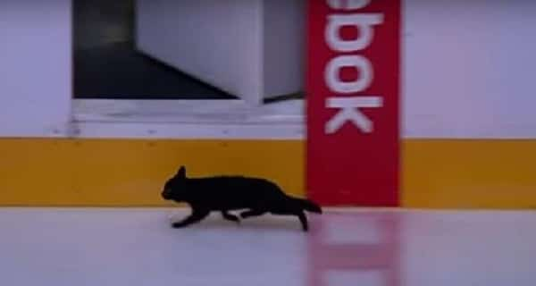 Black Cat Makes Appearance on the Ice at San Jose Sharks' Arena Before Playoff Game – VIDEO
