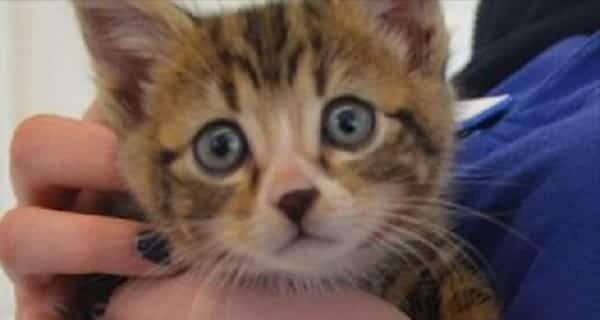Cute But Frightened Kitten Found Dumped With Trash!