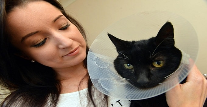 Black Cat Whose Rescue Stopped Rush Hour Traffic at Tyne Tunnel Now Recovering at Home!