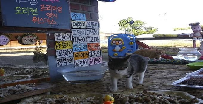 "In this April 29, 2016, image made from video provided by Cat TV host Koo Eun-je, stray cats approach foods prepared by South Korean Koo Eun-je, the 35-year-old host of the online Cat TV, at ""a restaurant for cats"" in JeollaNamdo, South Korea. (Photo: AP)"