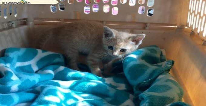 Tiny Ginger Kitten Rescued From Storm Drain Thanks to Social Media!