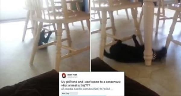 Is This a Cat? Or a Dog? Or Perhaps Something Else? – VIDEO!