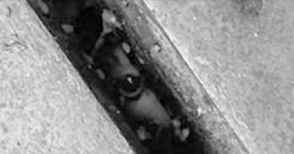 Cat Survives One Full Year Trapped Underground, But ….