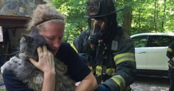 Newport News Firefighters Find Missing Cat After House Fire