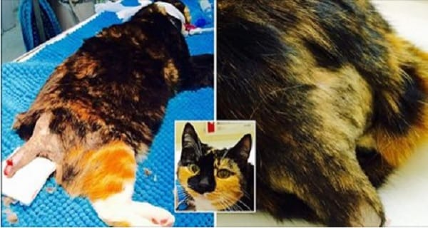 """Family Cat's Tail """"Hacked Off"""" in Deliberate Act of Cruelty!"""