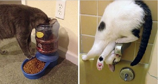 16 Hilarious Images Proving Cats Have Their Own Sense of Logic!