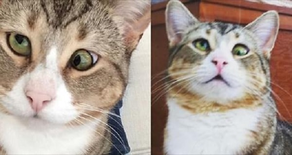 Gorgeous Tabby Cat with Googly Eyes Goes From Rescue Kitty to King of the House!