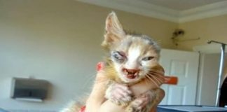 This Disfigured Cat Was Ignored By Everyone. Then A 7-Year-Old Girl Did Something Incredible...