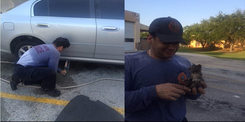 Florida Firefighter Rescues Tiny Kitten From Frame of Car and Then Does Something Incredible!
