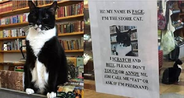 """The Story of Page, """"The Bookstore Kitty"""""""