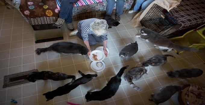 At lunchtime, Brenda Jarvis was swarmed by the cats of a trailer in Dixfield, Maine. She is among a group caring for dozens of cats.