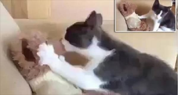 Smudge the Cat is Completely In Love … With His Stuffed Teddy Bear! – VIDEO!