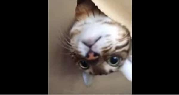 Ninja Cat Strikes from Above, With a Warning for Cat Lovers! – VIDEO!