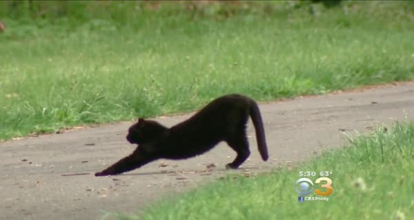 Many Groups, Including Prison Inmates, Come Together to Manage Feral Cat Population at Park in Pennsylvania!
