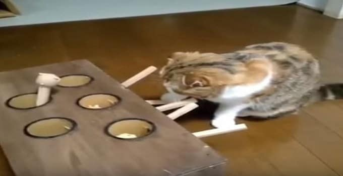"""Adorable Kitty Absolutely Obsessed With """"Whack-a-Mole"""" Game! VIDEO!"""