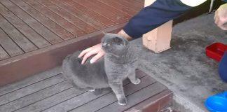 """Ticklish Cat Says """"Wowowowowowo""""!"""