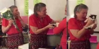 Thoughtful Pupils Had Surprise For Teacher Who Was Distraught Over Death of Her Beloved Cat! - VIDEO!