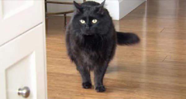 Pet Black Cat Who Went Missing During Fire, Came ….