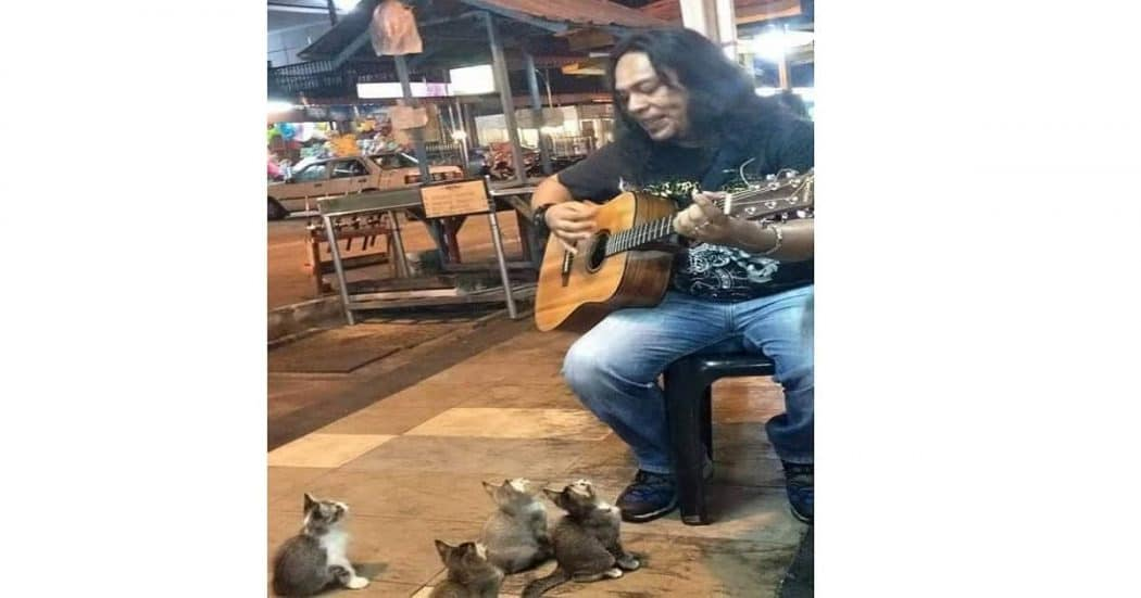 Malaysian Street Musician Entertains 4 Adorable Kittens And They Love His Music! – VIDEO