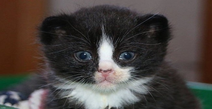 This weeks old kitten, now named Peanut, was discovered under a cottage in Five Islands thanks to a dog. Kyna Porteous has been helping it regain its health.
