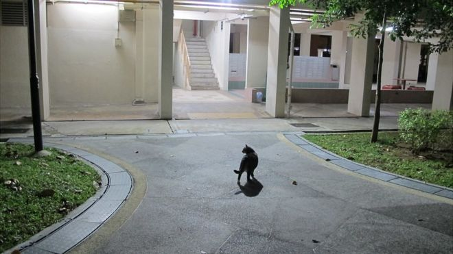 """There are an estimated 600 """"community cats"""" roaming the housing estates of Yishun"""