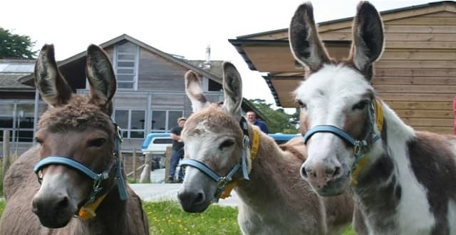 Donkeys Move in With 150 Cats