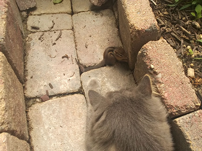 Cat Becomes Friends With A Chipmunk, Won't Stop Cuddling! 1