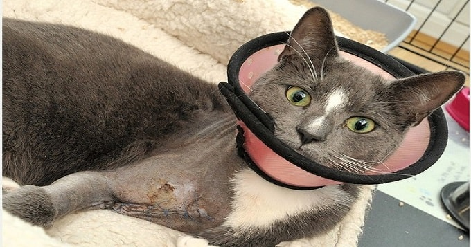 Dexter the cat almost lost his leg when he was shot with an air gun.