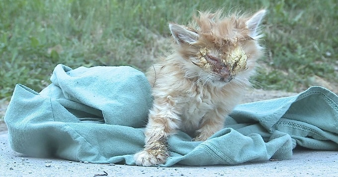 Youngstown Teen Receives PETA Award for Helping Injured Kitten!