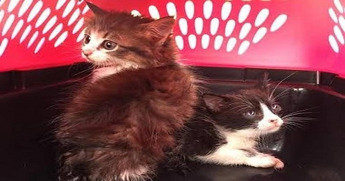2 Kittens Rescued From Texas Storm Drain and Their Happy Ending!