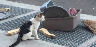 This Poor Cat Was Thrown Out onto the Street with All of His Stuff