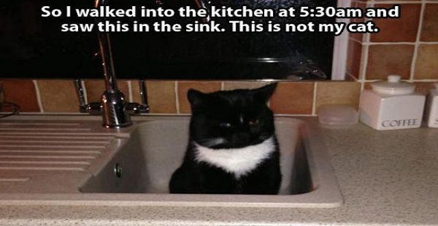 This is NOT My Cat. Hilarious Gallery!