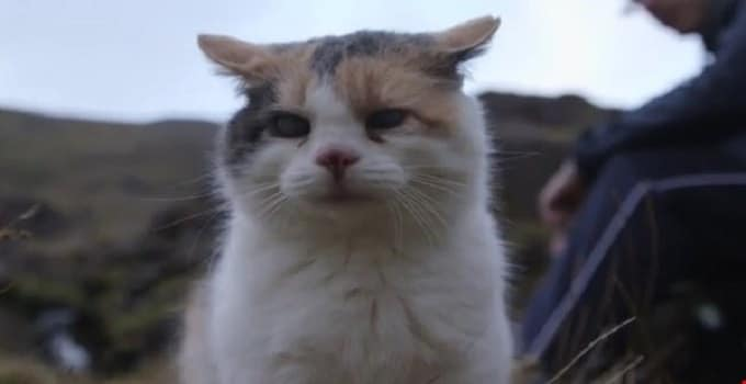 This Man and His Blind Cat Climbed Carrauntoohil to Raise Money for Charity!