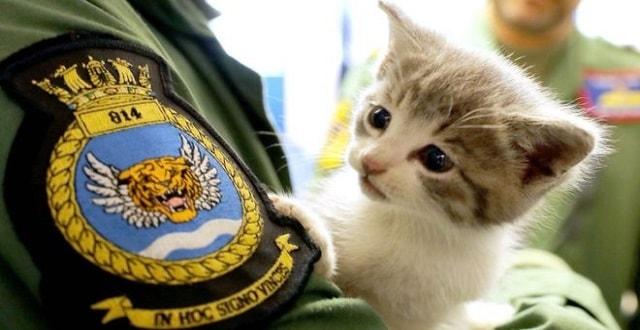 Kitten 'Travels 300 Miles' in Navy Pilot's Car Bumper!