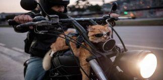 Hilarious Motorbiking Cat Turns Heads in Rio de Janeiro! - VIDEO!