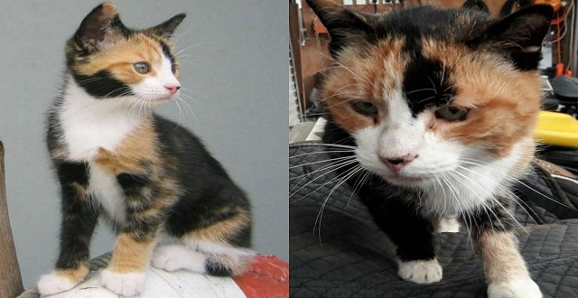 Then and now -- Sushi before her disappearance (L) and upon her return (R) (Fletcher Oxford / supplied)