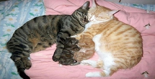 These Cats Are Amazing Parents!